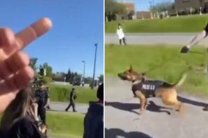 cão-polícia