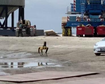 Cão Robótico